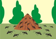 Ant hill Stock Images