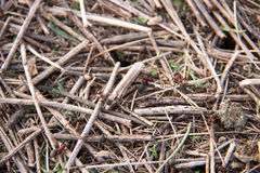 Ant hill as a background close-up macro in field Stock Image