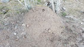 Red Ant Hill stock images