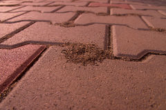 Ant hill created in pavement. Forming a volcano like structure Royalty Free Stock Image