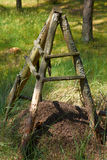 Ant hill in forest with wooden sign around Stock Photo