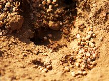 Ant Hill With High DOF Royalty Free Stock Image