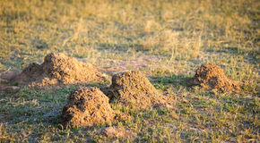 Ant Hill Mounds Royalty Free Stock Photography