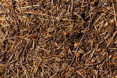 Ant hill Royalty Free Stock Photos