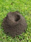 Ant Hills in San Pedro Garza Garcia, Mexiko lizenzfreies stockbild