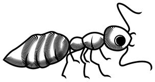 Ant. Illustrated ant clip art image on isolated white background Royalty Free Stock Photo