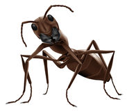 Ant illustration isolated insect. Ant illustration close up of small insect isolated on white background stock illustration