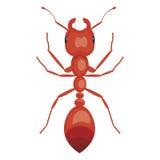 ant  illustration isolated on a white background Stock Image