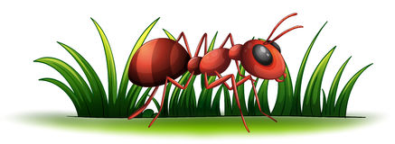 An ant Royalty Free Stock Photos