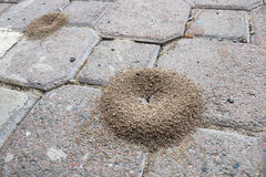 Ant Infestation and Outdoor Infrastructure Royalty Free Stock Image