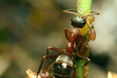 Ant Insect Stockbild