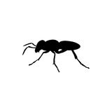 Ant insect black silhouette animal. Vector Illustrator.r Stock Photo