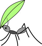 Ant, Insect, Bug, Animal Stock Photo