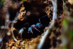 Ant in its home stock images