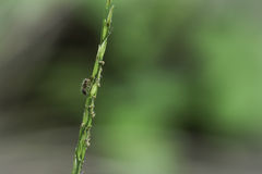 Ant. Its one kind of ant in Thailand stock photography