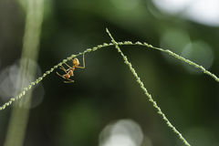 Ant. Its a red ant stock photography