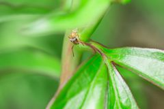 Ant on the leaf royalty free stock photo