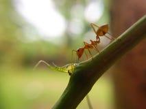 Ant Life fotografia de stock royalty free