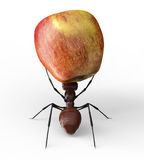 Ant is lifting an apple isolated on a white Royalty Free Stock Image