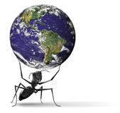 ant lifting heavy earth concept power strength  Royalty Free Stock Images