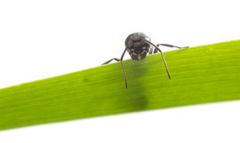 Ant looking down from grass Stock Photography