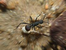 Ant Macro Stock Photography