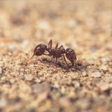 Ant Macro Royalty Free Stock Photos
