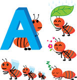 A-Ant Royalty Free Stock Photo