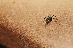 Ant. Moving towards a cliff Royalty Free Stock Image