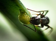 An ant in my Garden royalty free stock photo