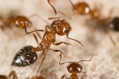 Ant in nature. super macro. In the park in nature royalty free stock image