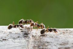 Ant in nature Stock Photography