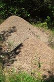 Ant Nest Stock Photography