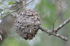 Ant nest. Stock Photo
