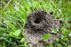 Ant nest Stock Images