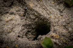 Ant nest hole on sand Stock Photo