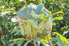 Ant nest Stock Photos