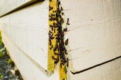 ant nest infestation Royalty Free Stock Photography