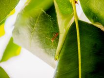 Ant nests on tree. Close up Royalty Free Stock Photos