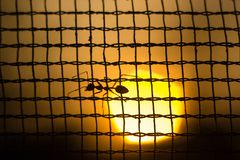 Ant on nets. Ant playing on nets while beautiful sunset royalty free stock photo