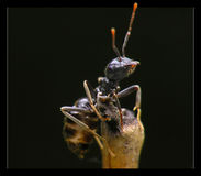 Ant by night Royalty Free Stock Images