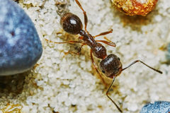 Ant outside in the garden Royalty Free Stock Photos