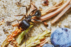 Ant outside in the garden Stock Image