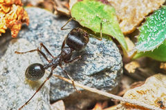 Ant outside in the garden Stock Images