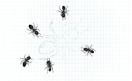 Ant patterns royalty free illustration