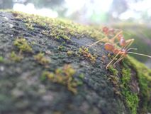 ant photography Royalty Free Stock Photo