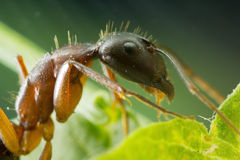 An ant on a plant at high magnification Stock Photo