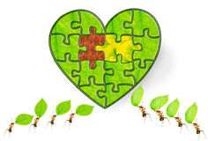Ant puzzle Stock Images