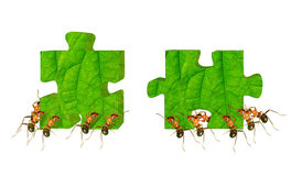 Ant Puzzle Royalty Free Stock Photography