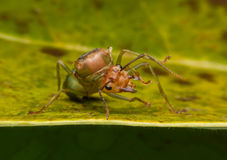 Ant queen on Yellow Green. Background stock photography